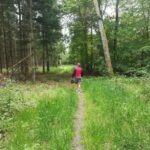 Martin i skoven plukker nåle